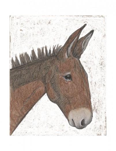 mule-white